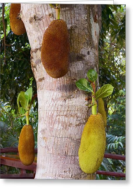 Jackfruit Greeting Card by Irina Effa