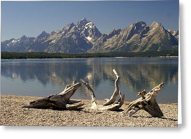 Jackson Lake 1 Greeting Card by Marty Koch