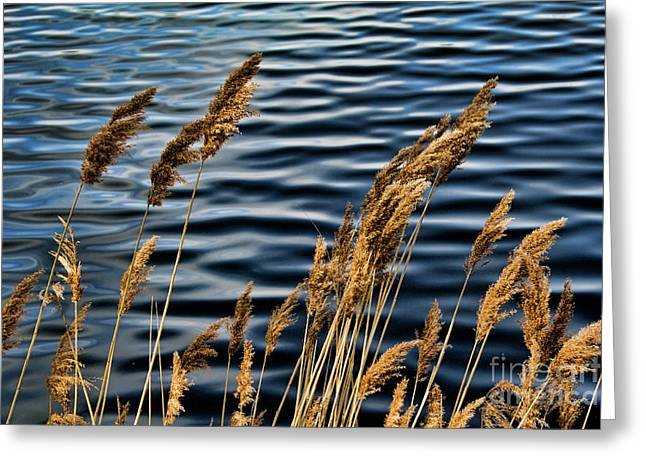 Jacqueline Kennedy Reservoir.  Greeting Card by Chuck Kuhn