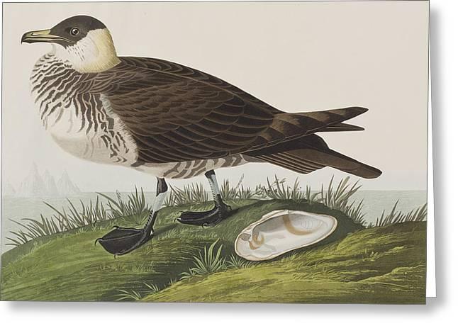 Jager Greeting Card by John James Audubon