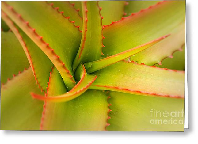 Jagged Aloe Greeting Card