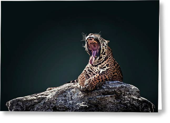 Jaguar 4 Greeting Card