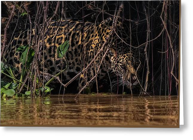 Greeting Card featuring the photograph Jaguar In Vines by Wade Aiken