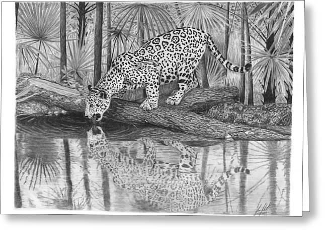 Jaguar Drinking Water Drawing Greeting Card
