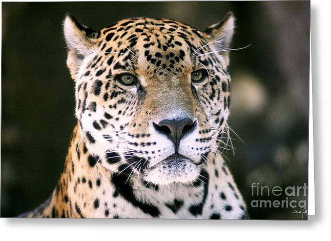 Jaguar Greeting Card by Scott Pellegrin