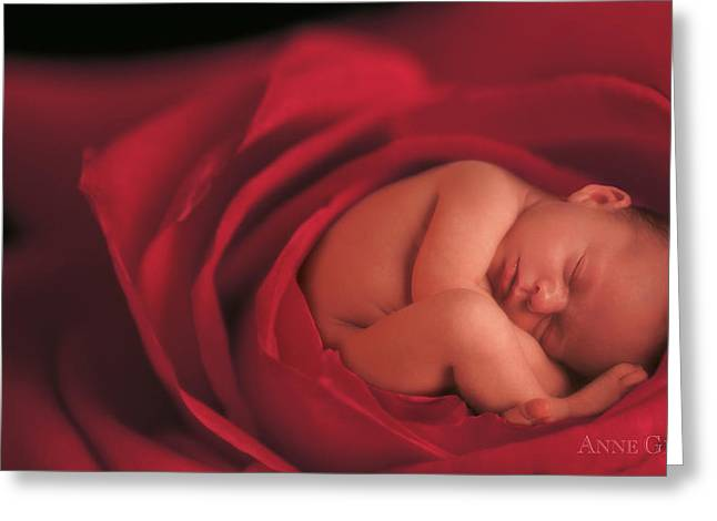 Red Petals Greeting Cards - Jake in Rose Greeting Card by Anne Geddes