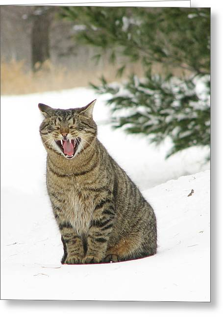 Jake In The Snow Greeting Card by Laurie With