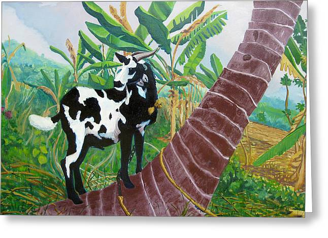 Jamaican Goat In A Tree Greeting Card by D T LaVercombe