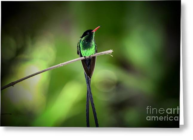 Jamaican Hummingbird Greeting Card