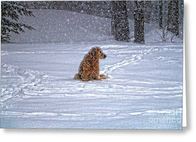 January Blizzard Greeting Card