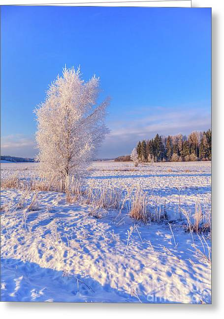 January Day Greeting Card
