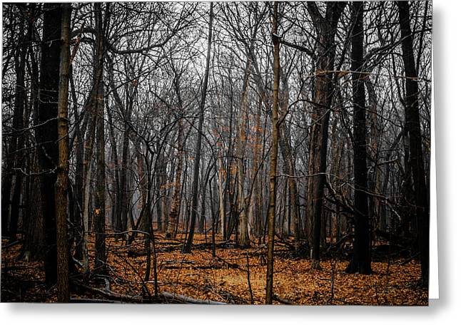 January Forest Rains Greeting Card
