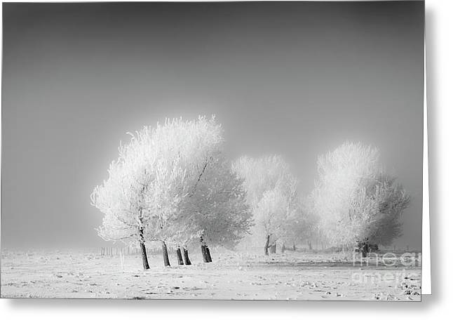 January Frost Greeting Card