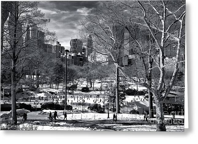 January In Central Park Greeting Card by John Rizzuto