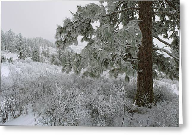 January On Kamiak Butte Greeting Card by Jerry McCollum