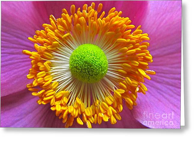 Sean Griffin Greeting Cards - Japanese Anemone Close Up Greeting Card by Sean Griffin