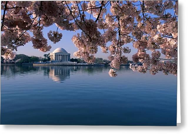 Japanese Cherry Blossoms Prunus Greeting Card