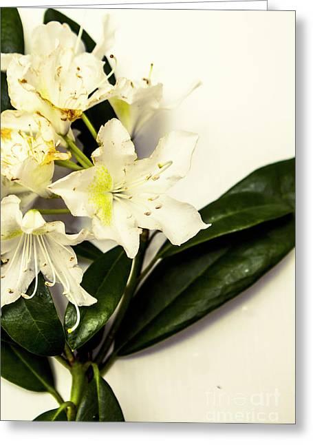Japanese Flower Art Greeting Card