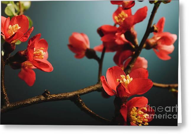 Japanese Flower Greeting Card by Jelena Jovanovic