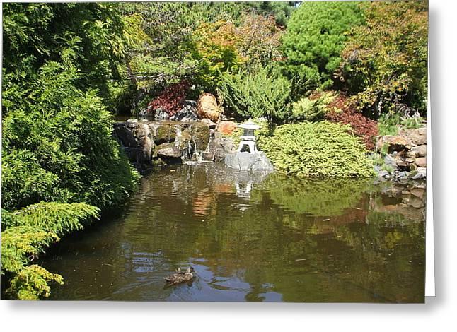 Japanese Garden At The Botanical Gardens In Hobart Tasmanis Greeting Card by Bethwyn Mills