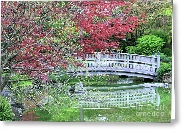 Japanese Garden Bridge In Springtime Greeting Card by Carol Groenen