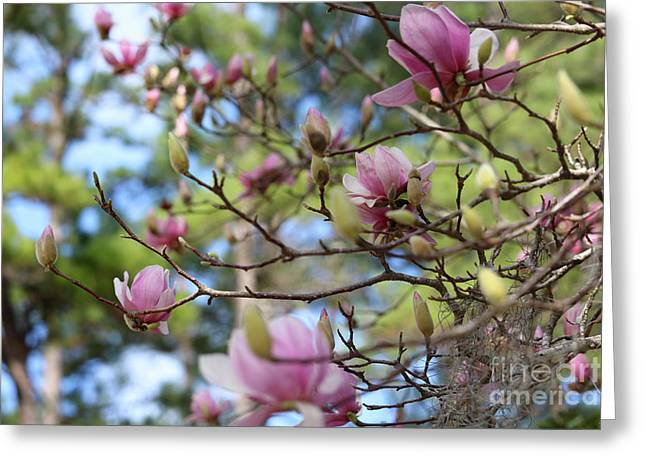 Japanese Magnolia Branches Greeting Card by Carol Groenen
