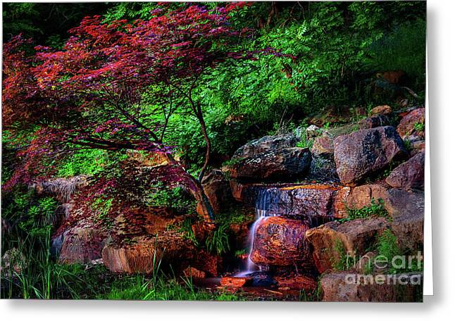 Japanese Maple At Honor Heights Park Greeting Card by Tamyra Ayles