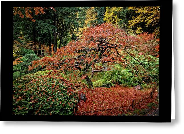 Greeting Card featuring the photograph Japanese Maple At The Japanese Gardens Portland by Thom Zehrfeld
