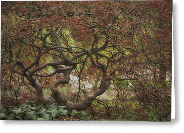 Japanese Maple In Spring Greeting Card by Jacqui Boonstra