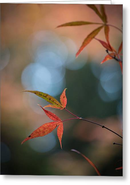 Japanese Maple Leaves Meditation Greeting Card by Mike Reid