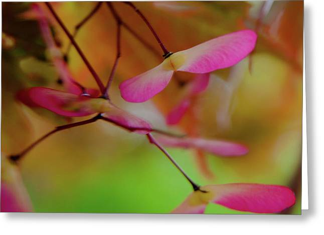 Greeting Card featuring the photograph Japanese Maple Seedlings by Brenda Jacobs