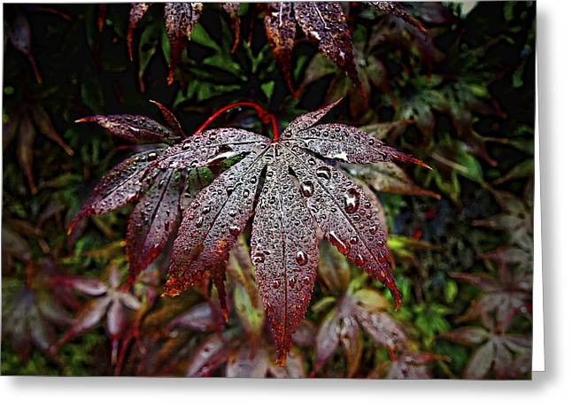 Japanese Maples In The Rain Greeting Card by Michael Putnam