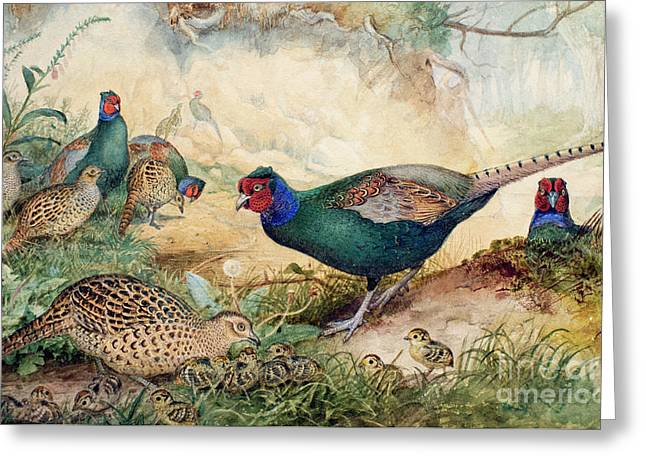 Japanese Pheasants Greeting Card