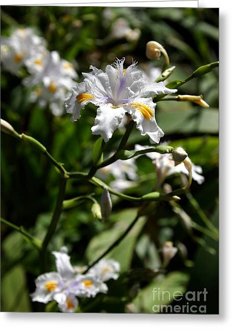 Japanese Roof Iris Greeting Card