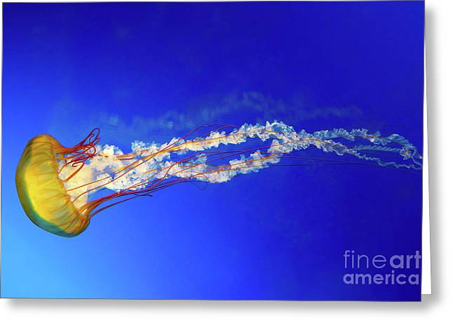 Japanese Sea Nettle Jellyfish Greeting Card by Jane Rix