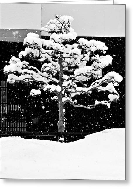 Winterscape Greeting Cards - Japanese Tree in the Snow Greeting Card by Dean Harte