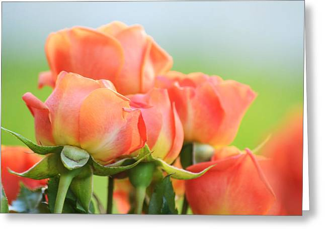 Jardin De Rosas Greeting Card