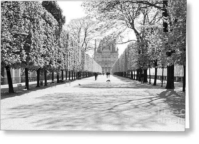 Jardin Des Tuileries Greeting Card by Alex Cassels