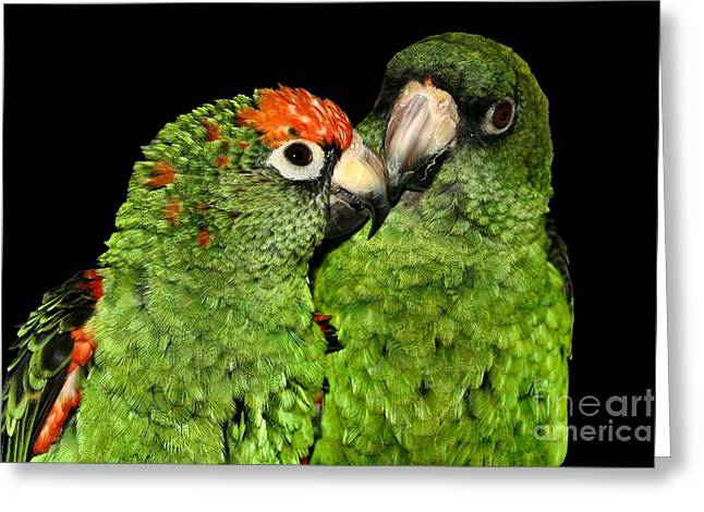 Greeting Card featuring the photograph Jardines Parrots by Debbie Stahre