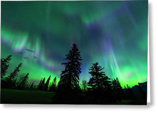 Jasper National Park Aurora Greeting Card by Dan Jurak