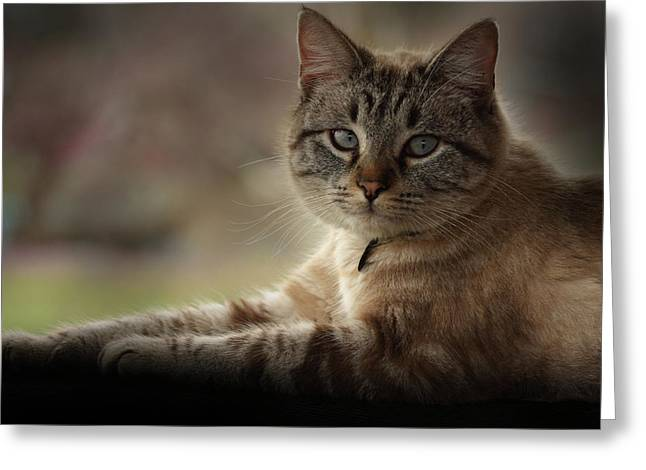Greeting Card featuring the photograph Jaspurr by Kim Henderson