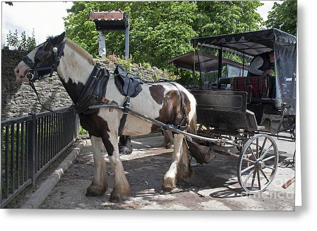 Jaunting Cart Killarney Ireland Greeting Card by Cindy Murphy - NightVisions