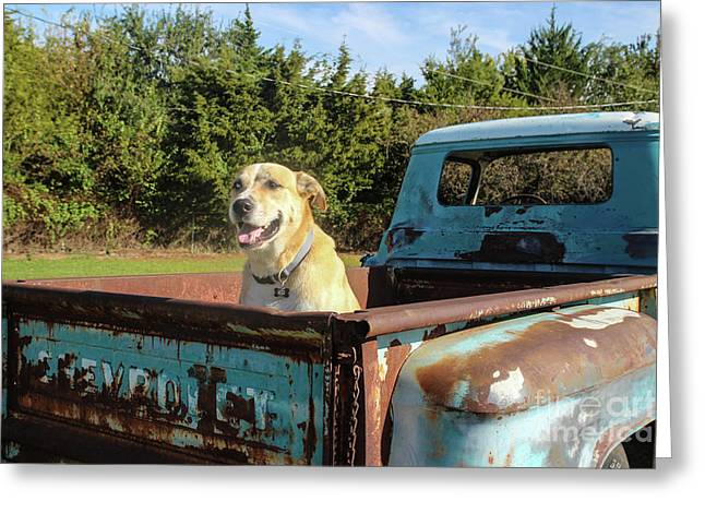 Jd Ready For A Ride Greeting Card by Laura Deerwester