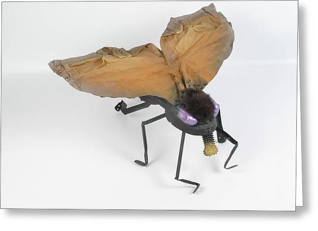 Jeanetic Violet-eyed Fly Greeting Card by Michael Jude Russo