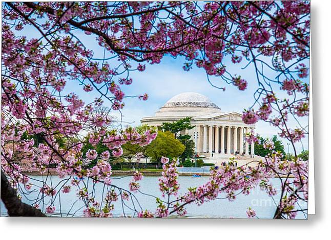 Jefferson Greeting Cards - Jefferson Memorial Cherry Blossoms Greeting Card by Jim DeLillo