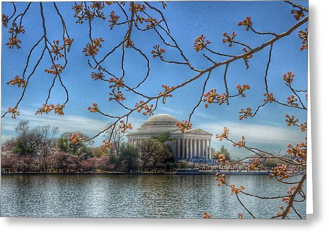 Jefferson Memorial - Cherry Blossoms Greeting Card by Marianna Mills