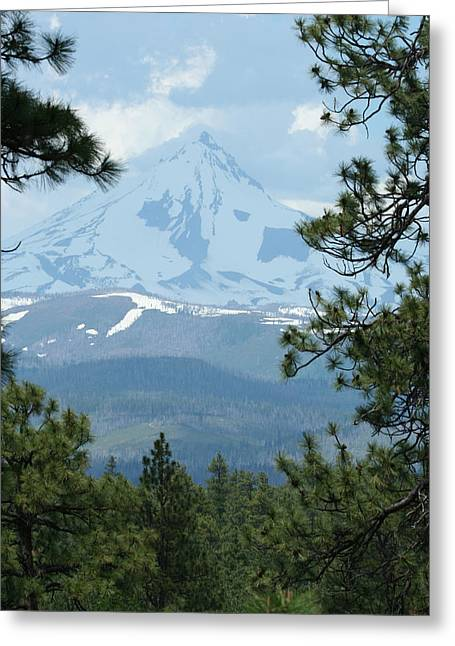 Greeting Card featuring the photograph Jefferson Pines by Laddie Halupa