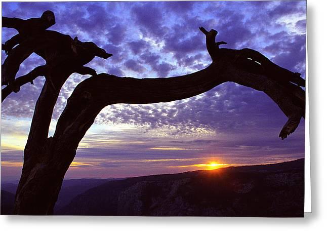Jeffrey Pine Sentinel Dome Greeting Card by Alan Lenk