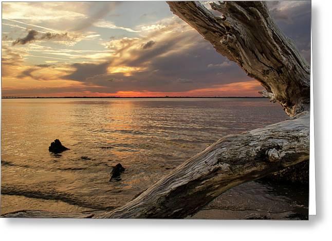 Jekyll Driftwood At Sunset Greeting Card