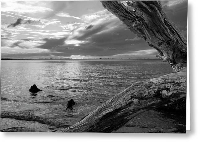 Jekyll Driftwood At Sunset In Black And White Greeting Card